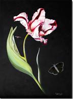 Tulip1502